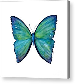 Insecta Acrylic Prints