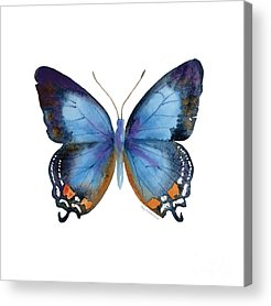 Insects Acrylic Prints