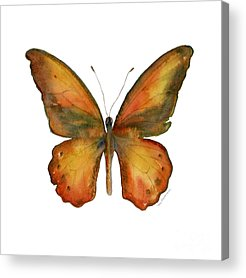 Orange And Brown Wings Acrylic Prints