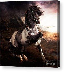 Wild Horse Digital Art Acrylic Prints