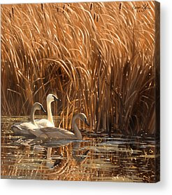 Water Fowl Acrylic Prints