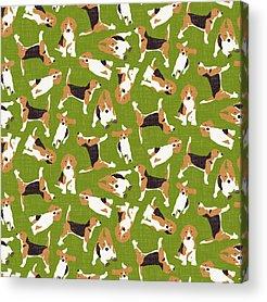 Beagle Acrylic Prints