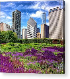 Beautiful Acrylic Prints