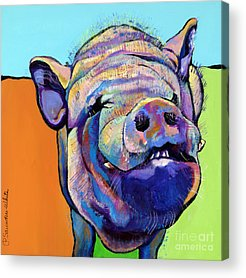 Barnyard Animals Acrylic Prints