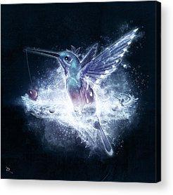 Flying Hummingbird Acrylic Prints