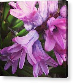 Florals Acrylic Prints