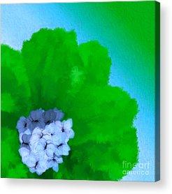 Holley Jacobs Acrylic Prints