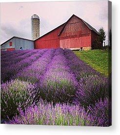 Rural Scenes Acrylic Prints