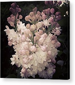 Beauty Acrylic Prints
