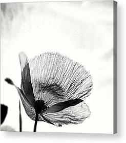 Iphonesia Acrylic Prints