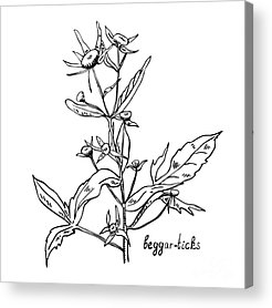 Herbal Acrylic Prints