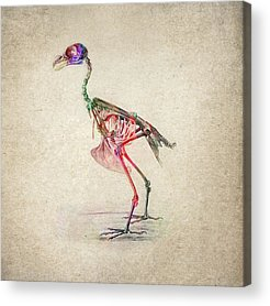 Bird Skeleton Acrylic Prints