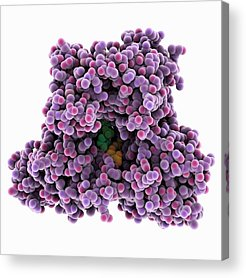 Adenosine Triphosphate Acrylic Prints