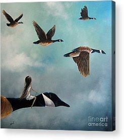 Canadian Goose Acrylic Prints