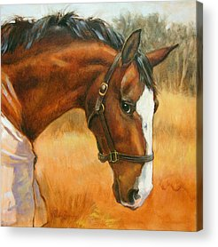 Warmblood Acrylic Prints