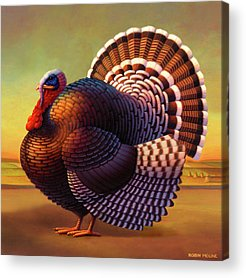 Turkey Acrylic Prints