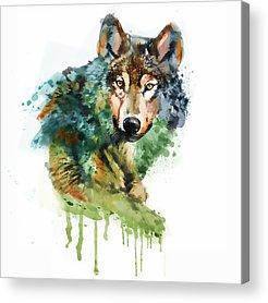 Orange Wolf Art Fine Art America