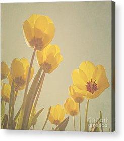 Yellow Tulip Acrylic Prints