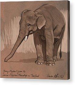 Elephant Acrylic Prints