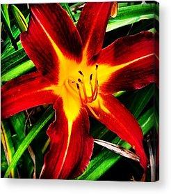 Star Acrylic Prints