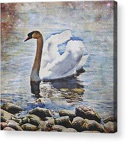 Desert Lake Acrylic Prints