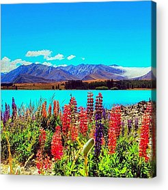 Sweet Acrylic Prints