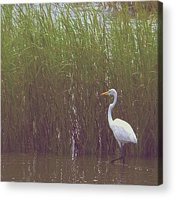 Nature Seekers Acrylic Prints