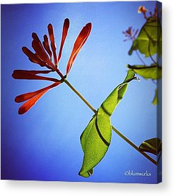 Cool Acrylic Prints