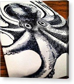 Octopus Acrylic Prints