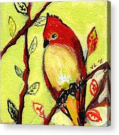Red Cardinal Acrylic Prints