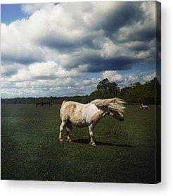 Forelock Photographs Acrylic Prints