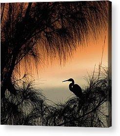 Nature Acrylic Prints