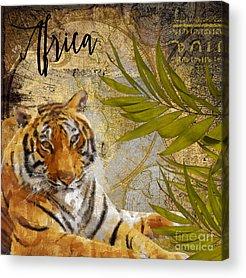 African Tiger Acrylic Prints