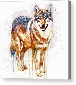 Alpha Wolf Acrylic Prints