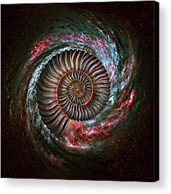 Spin Acrylic Prints