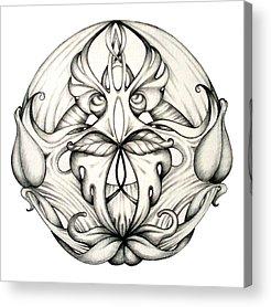 Organic Drawings Acrylic Prints