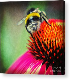 Abstracted Coneflowers Mixed Media Acrylic Prints