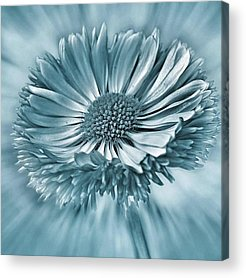 Summer Acrylic Prints