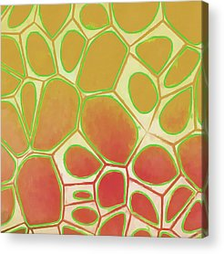 Pattern Acrylic Prints