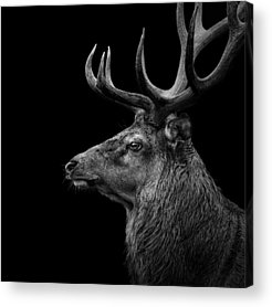 Zoos Acrylic Prints