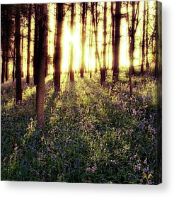 Warwickshire Acrylic Prints