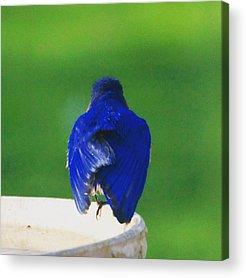 Ornithology Acrylic Prints