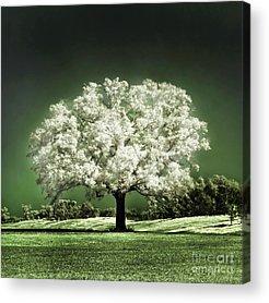 Cherry Tree Acrylic Prints