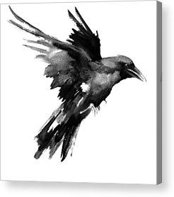 Raven Acrylic Prints