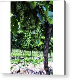 Grapes Acrylic Prints