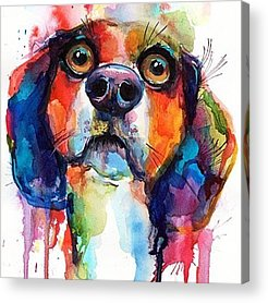 Dogs Acrylic Prints