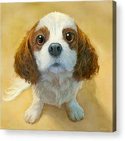 Dog Portrait Acrylic Prints