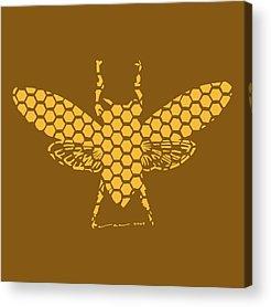 Hornet Acrylic Prints