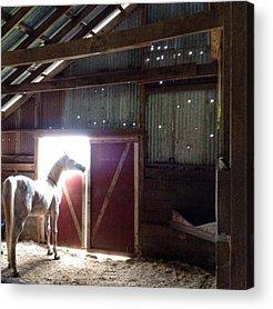 Horses Acrylic Prints