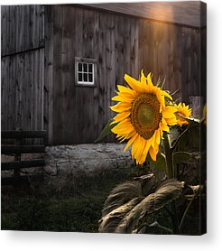 Griswold Ct Acrylic Prints